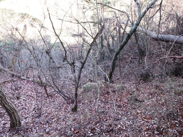 小泉上の城201601 (47)