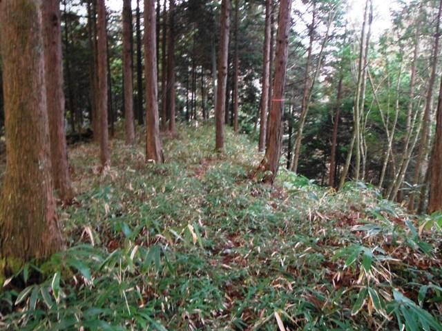 滝之沢城 (14)