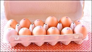 頂き物の卵