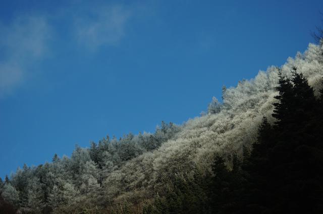 青空と木が