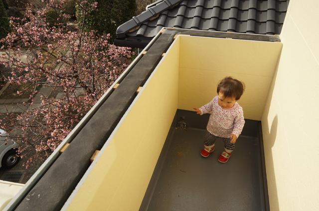 新しい家のベランダから見える、桜