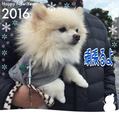 20160101155554159.jpeg