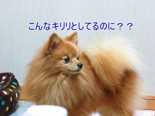 s-IMG_3289.jpg