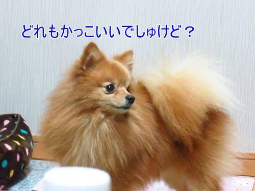s-IMG_3290.jpg