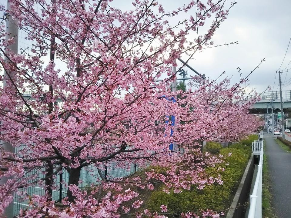 01谷本公園 (960x720)