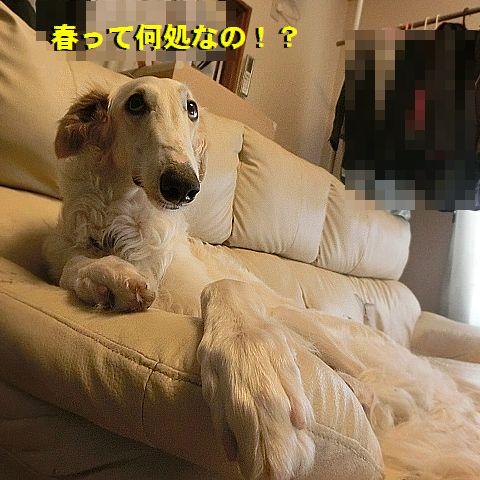 b_20160309012741ba4.jpg