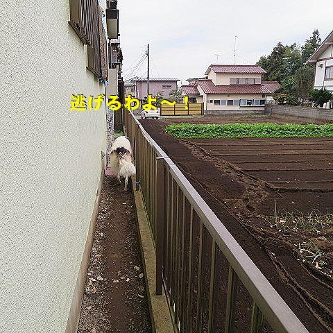 c_20151225021930481.jpg