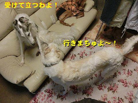 c_2015123102304300e.jpg