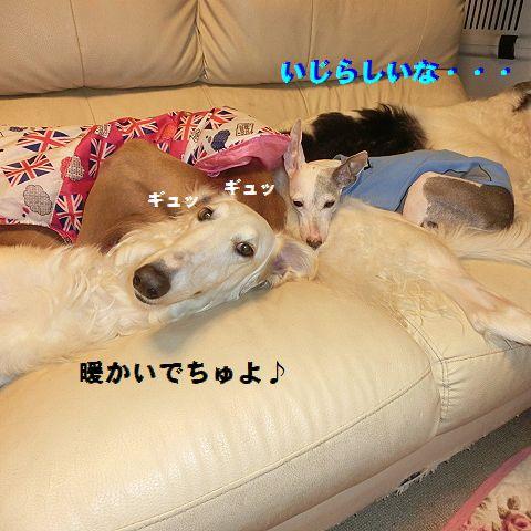 c_20160124231256fa5.jpg