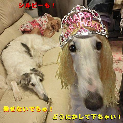 d_201602210147261e5.jpg