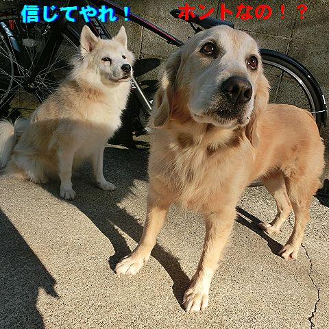 f_201601060145476ae.jpg
