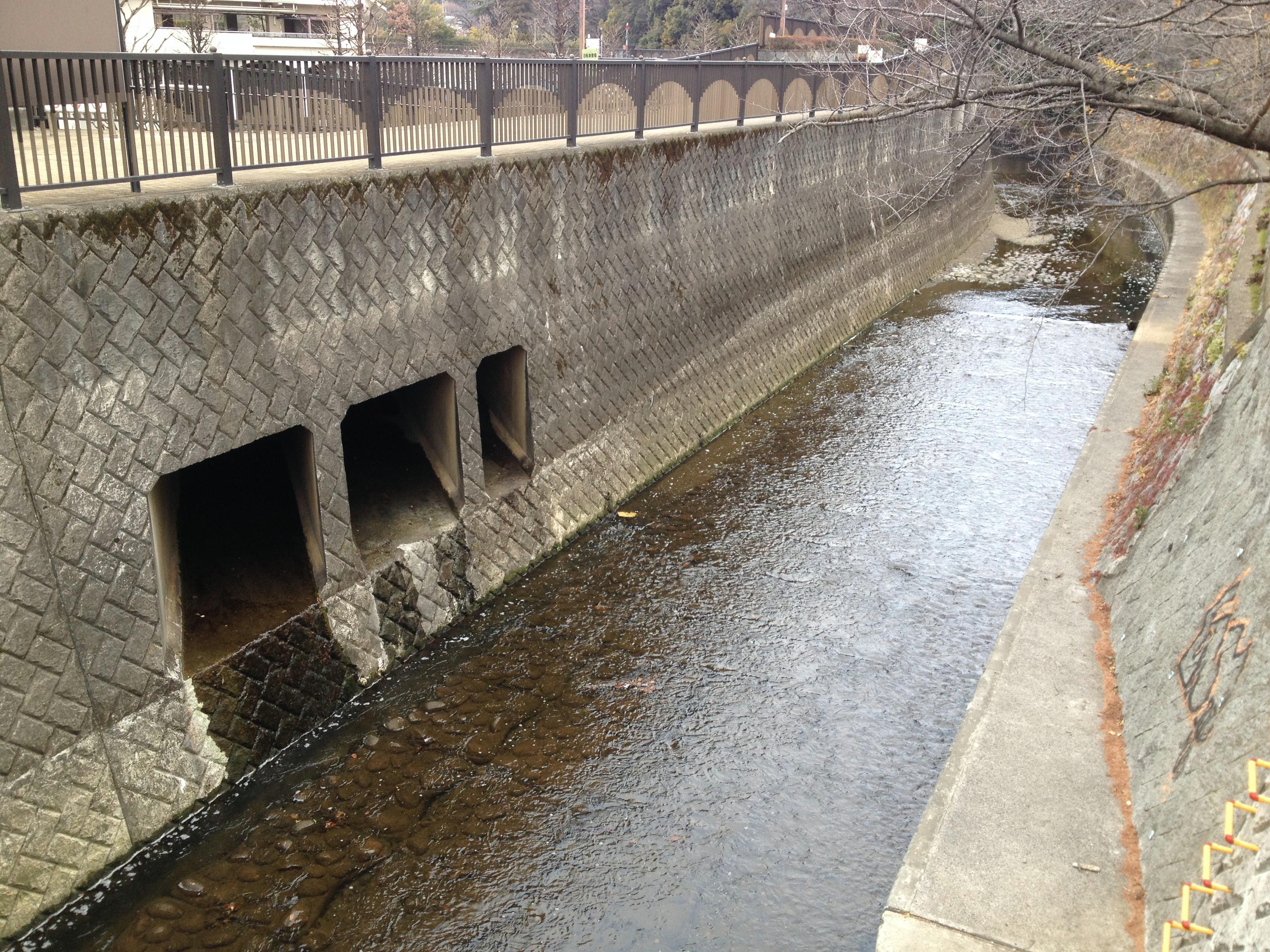 哲学堂公園ハイツの裏の妙正寺川