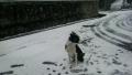 初めての雪1