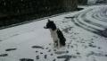 初めての雪2