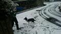 初めての雪3