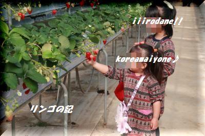 イチゴ狩り