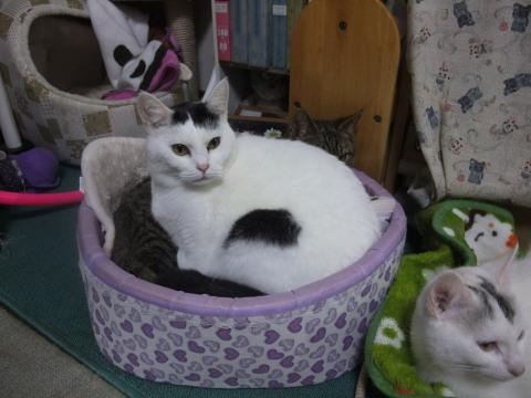 猫ベッド人気
