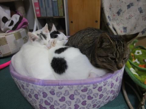 猫ベッド 3にゃん