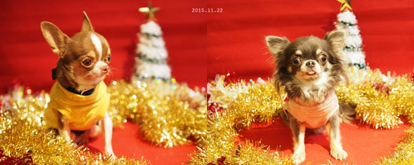 クリスマスショット