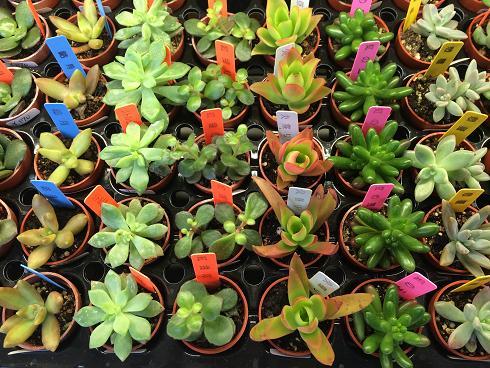 多肉植物170
