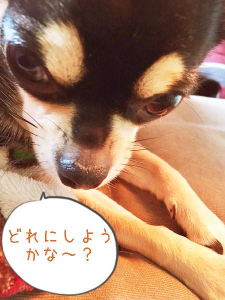2015-11-12 ちまき 4 ブログ用