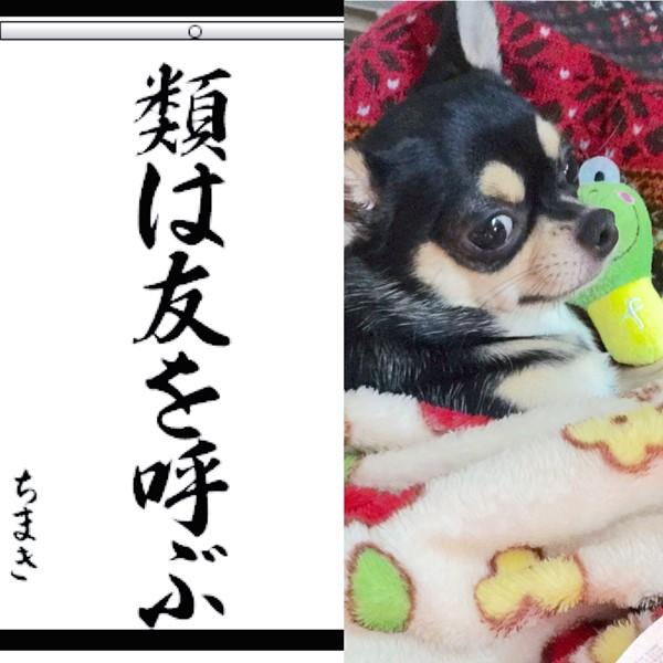 2016-01-20 ちまき