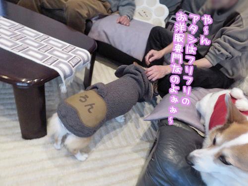 フリフリ専門☆