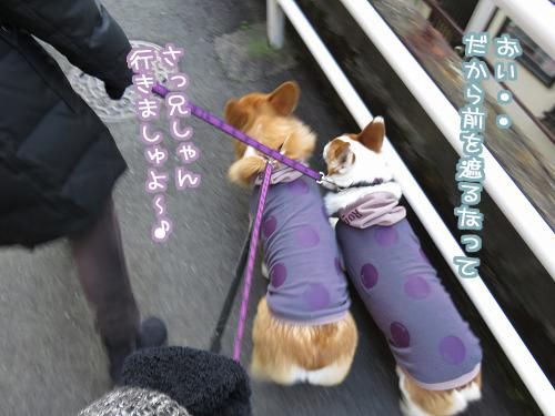 お散歩出発~