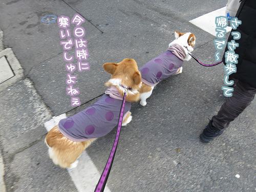 さっさ散歩して