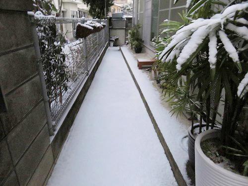 雪・・積もりました~
