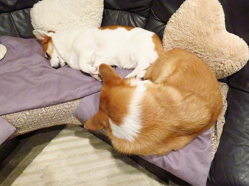 仲良く寝ているふたりですが