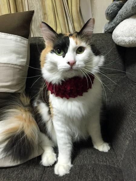 手編みの襟巻き