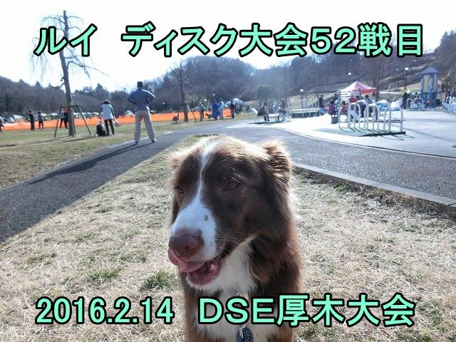 20160214dse (2)
