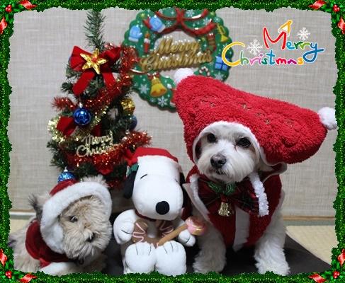 クリスマスIMG_8532