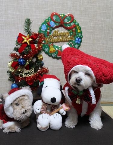 クリスマスIMG_8533 (499x640)