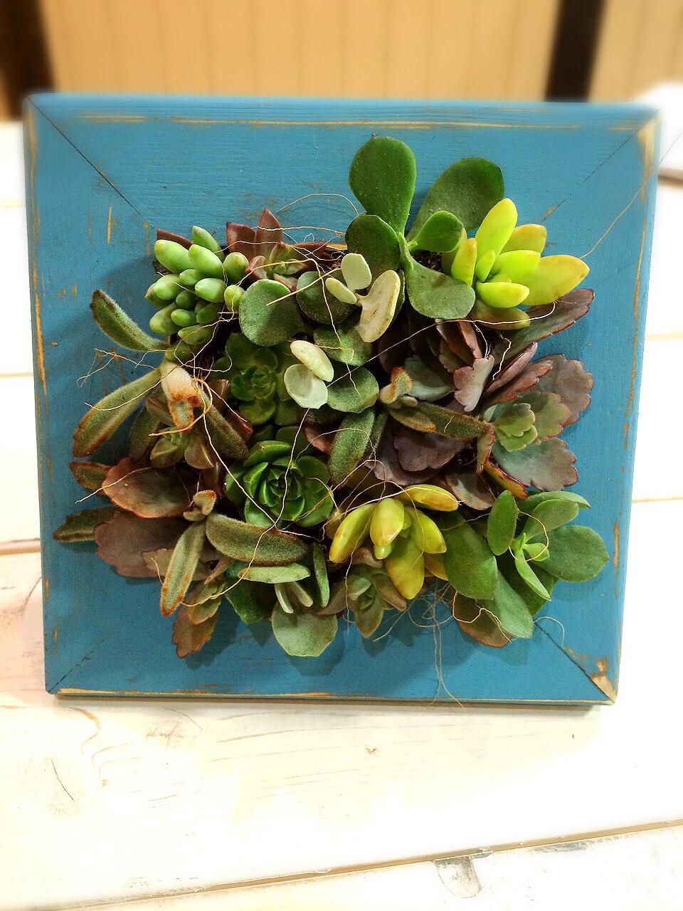多肉植物を寄せ植えして世界にひとつのミニガーデンを作ろう!