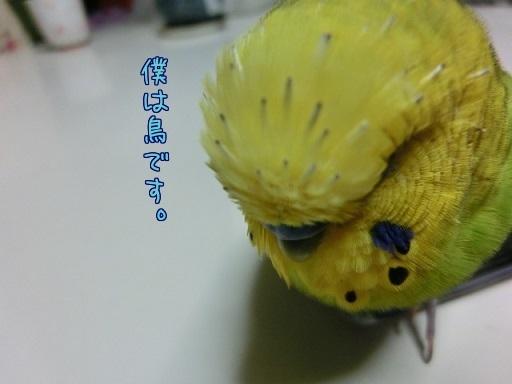 僕は鳥です