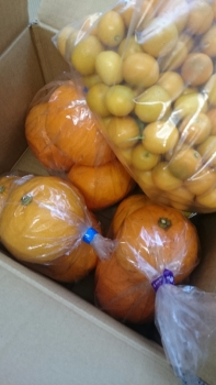 金柑&柑橘