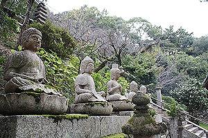 神恵院と観音寺と梧桐庵7
