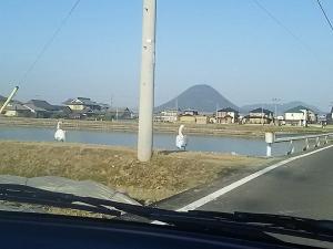 白鳥の湖1