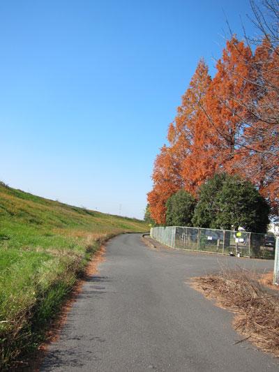 kawashima.jpg