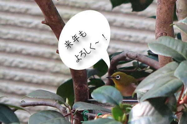 meziro-yoroshiku.jpg