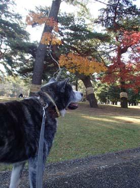 秋の公園2