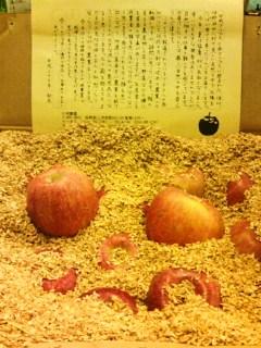 20151127片桐農園さんサンふじ