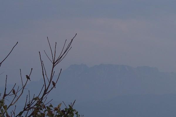 石鎚山の風景 石鎚山を遠望