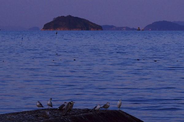 河原津海岸 野鳥と瀬戸の海