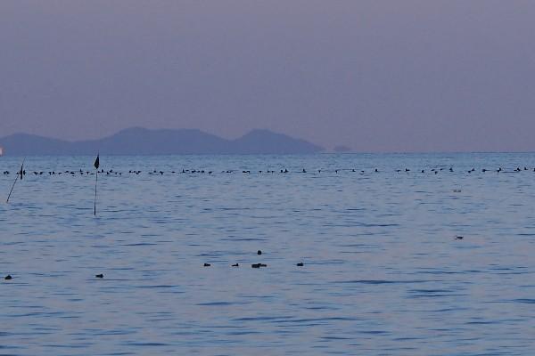 瀬戸内海 河原津海岸 海の風景