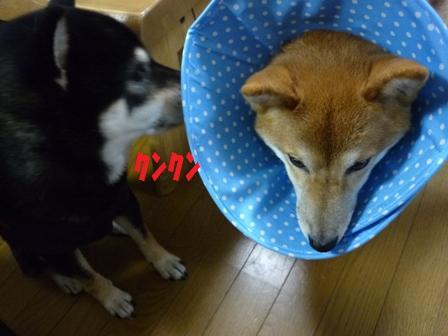 blog10177.jpg