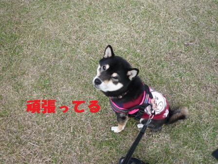 blog10255.jpg