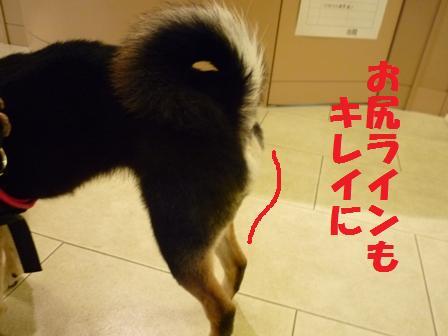 blog10337.jpg